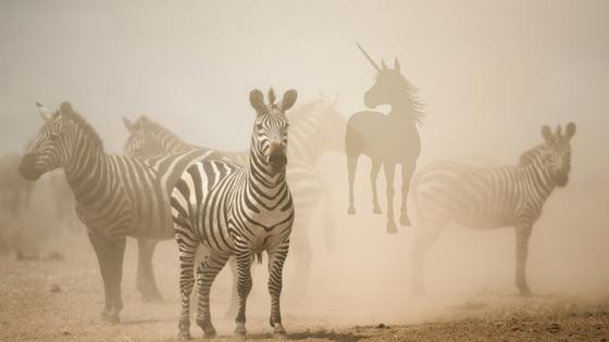 unicorn in field on zebras